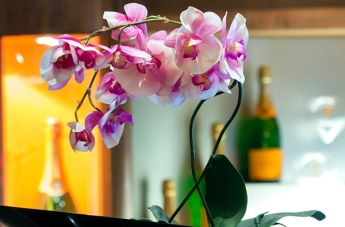 Orchids in the Veuve Cliquot Bar, Queen Mary 2