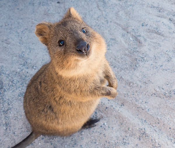 This little creature is so cute it could star in its own Disney film.