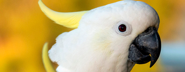 Up close with cockatoos
